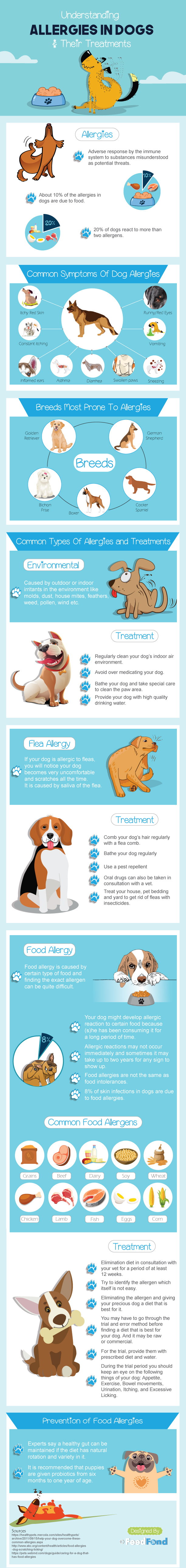 All You Need To Know About Allergies In Dogs [Infographic]