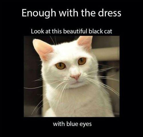 Black Cat Blue Eyes Color