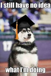Dog Graduate No Idea