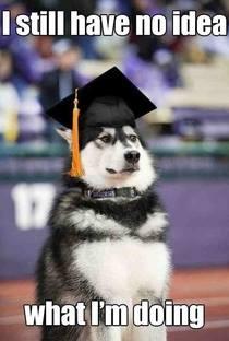 Dog Graduate No Idea