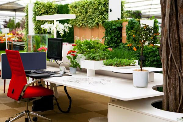 Engaging Office Plants