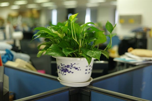 Add More Green To Your Life - The Importance Of Interior Plants