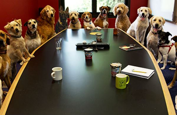 Pet Friendly Office Dogs