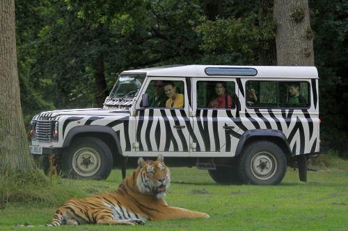 it-vip-tigers