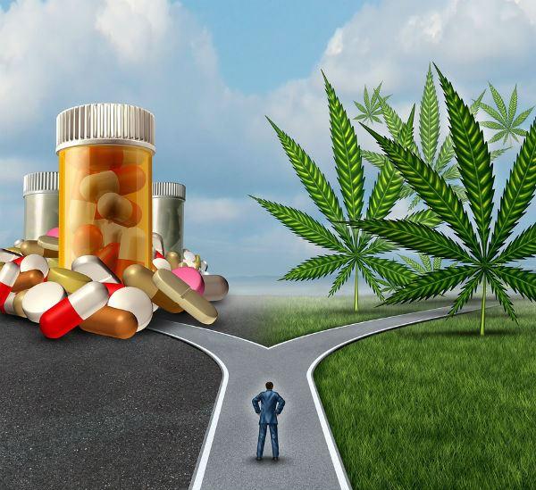 Medical Cannabis Choice