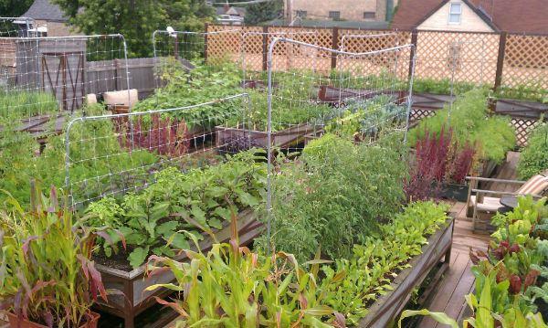 Organic Rooftop Garden